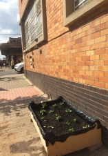 The result, veggie garden placed where the pavement changes
