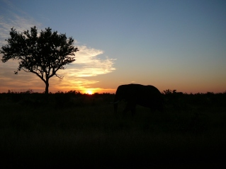 Sunrise and an elephant