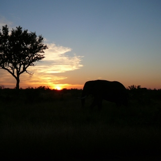 Sunrise and an elephant