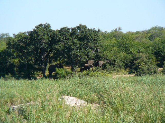 Elephant family across the river